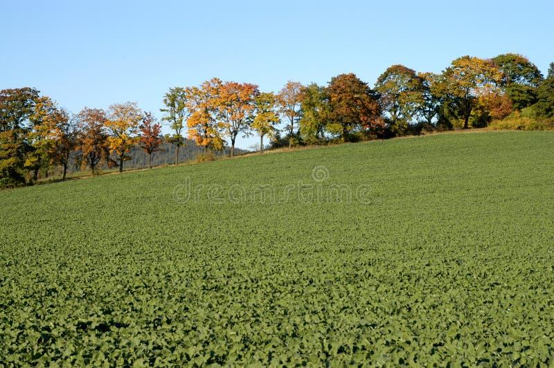 Download Höst arkivfoto. Bild av säsongsbetonat, utomhus, yellow - 288436