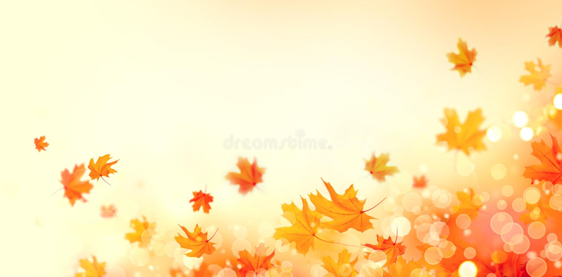 Höst Blossar abstrakt bakgrund för nedgången med färgrika sidor och solen arkivfoton
