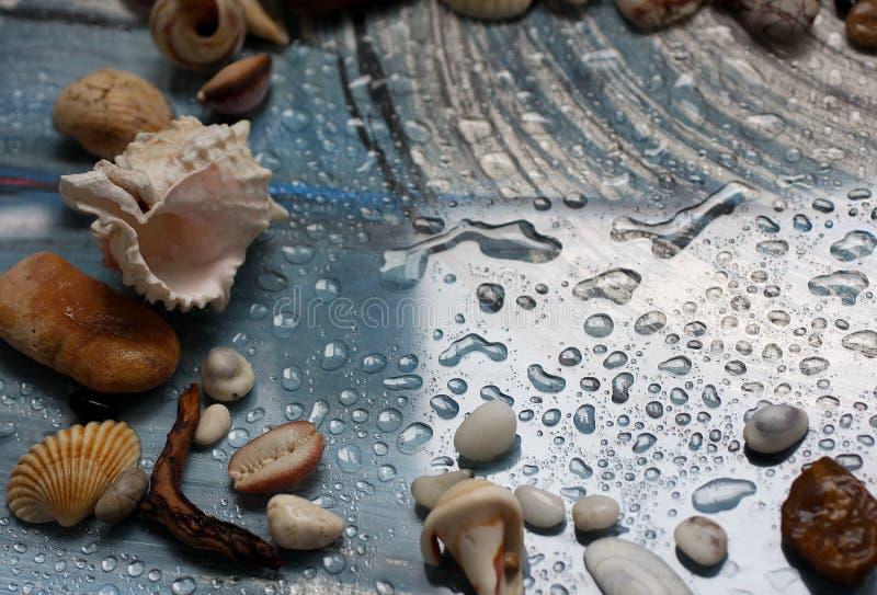 Höst, droppar av vatten, snäckskal och havet nära förbi arkivfoton