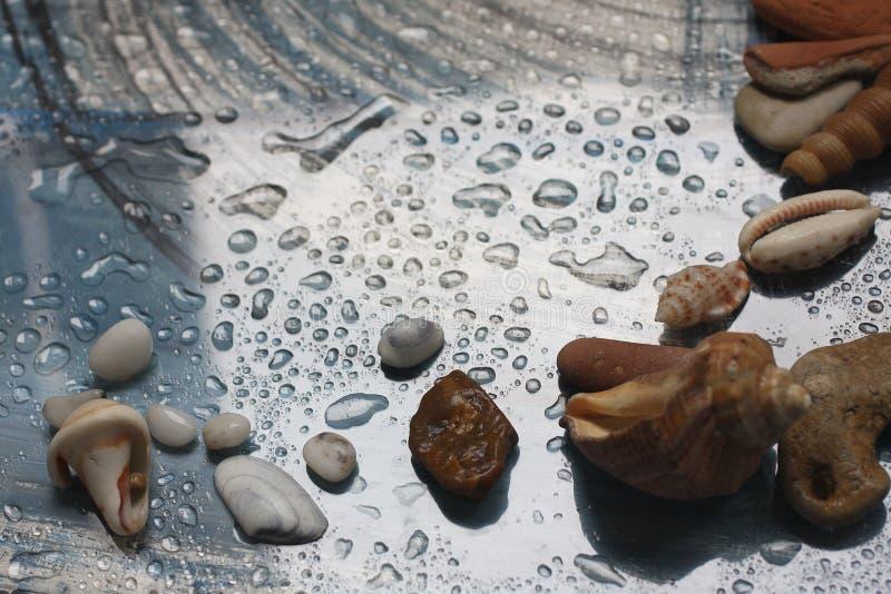 Höst, droppar av vatten, snäckskal och havet nära förbi royaltyfri fotografi