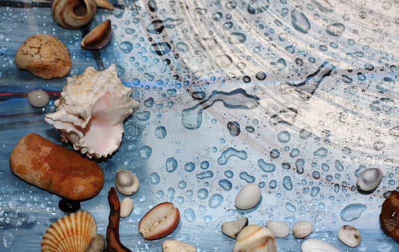 Höst, droppar av vatten, snäckskal och havet nära förbi royaltyfri bild