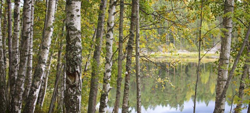 höst färgrika finland fotografering för bildbyråer