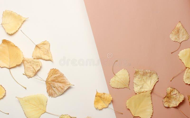 höst fallna leaves arkivbilder