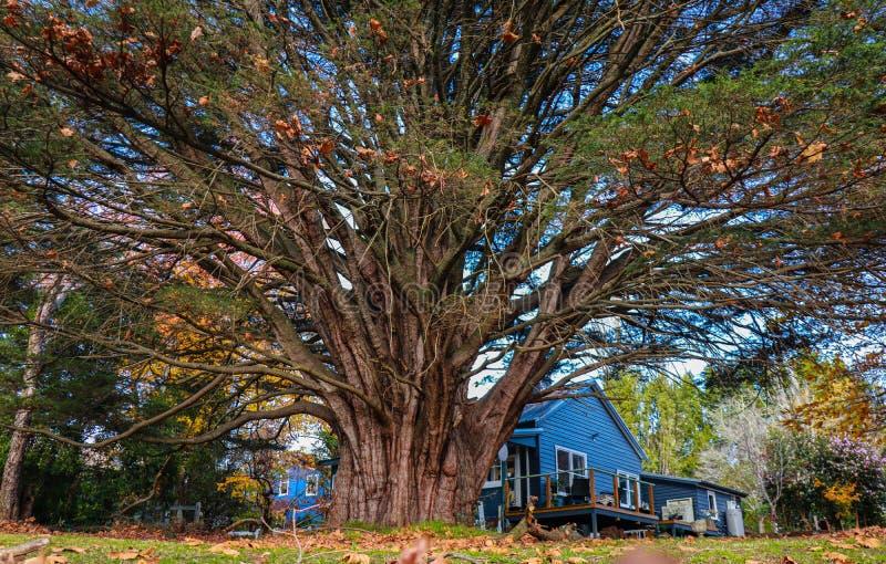 Höst i de blåa bergen av Sydney royaltyfria bilder