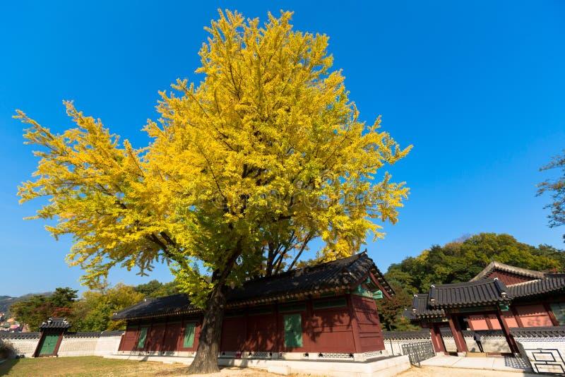 Höst i den Changdeok slotten fotografering för bildbyråer