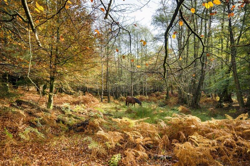 Höst i den nya skogen arkivbild