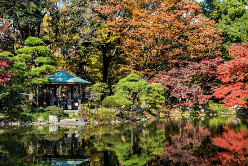 Höst i en trädgård i mitten av Tokyo royaltyfri fotografi