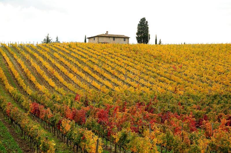 Höst i en Wineyards i Tuscany, Chianti, Italien arkivfoton