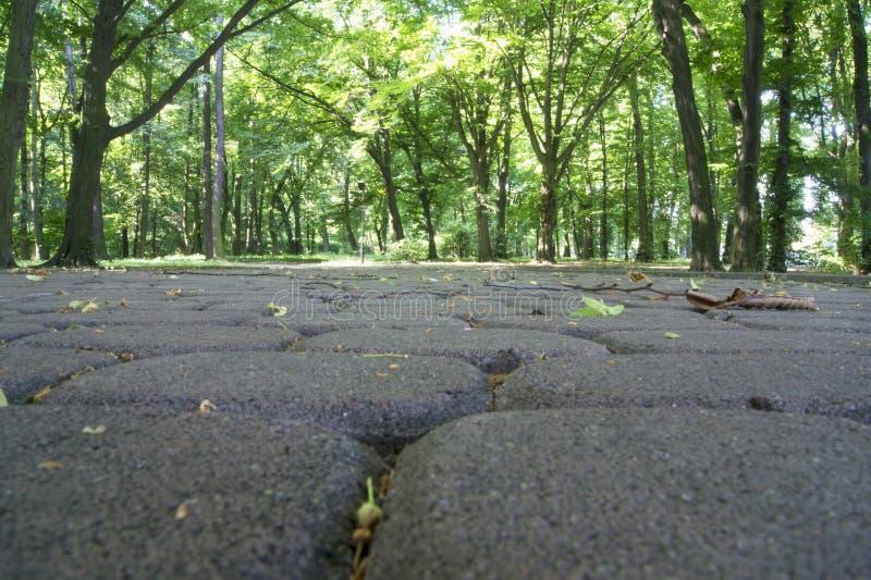 Höst i parkera Våta gulingsidor på vägen Bakgrund arkivfoton
