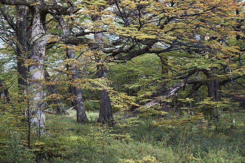 Höst i Patagonia, Chile royaltyfri bild