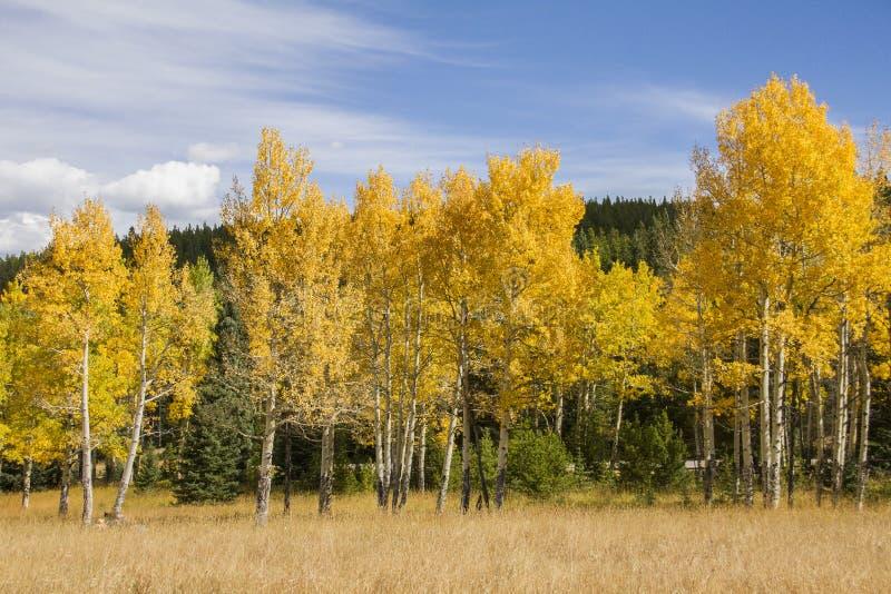 Höst i Rocky Mountain National Park arkivbilder