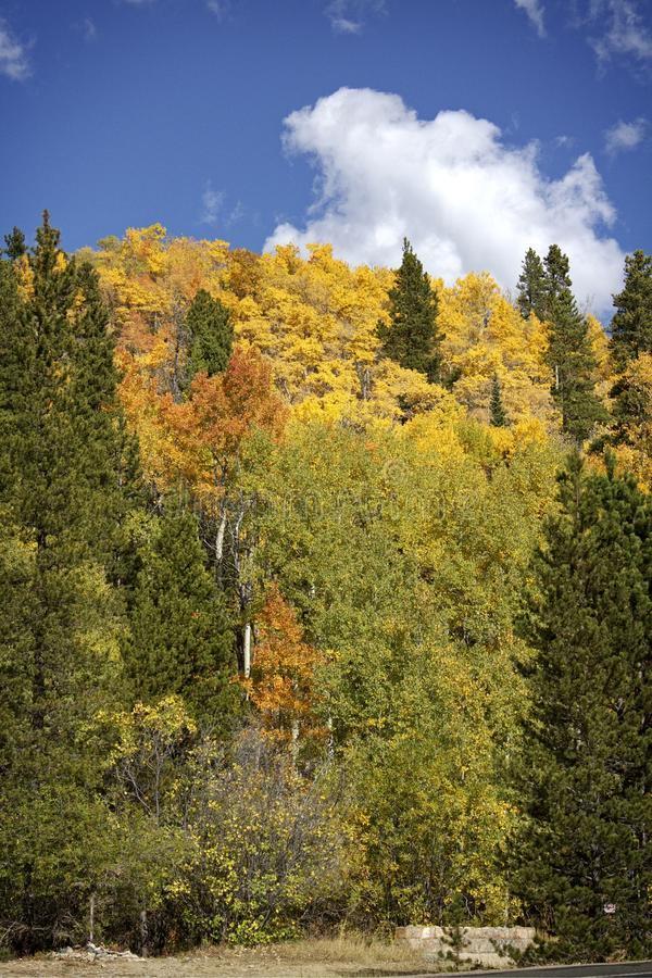 Höst i Rocky Mountain National Park royaltyfria bilder