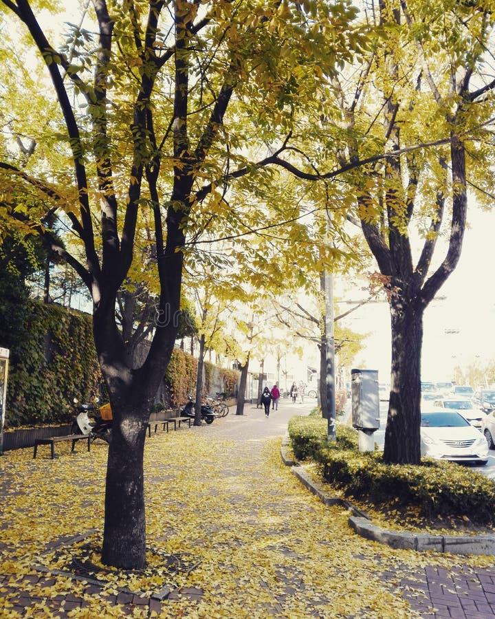 Höst i Seoul arkivfoto