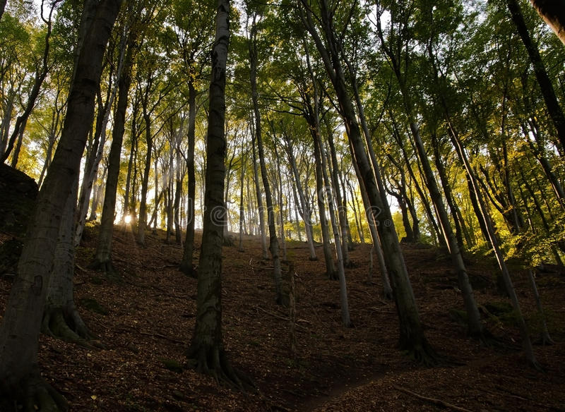 Download Höst i skog fotografering för bildbyråer. Bild av liggande - 27285023