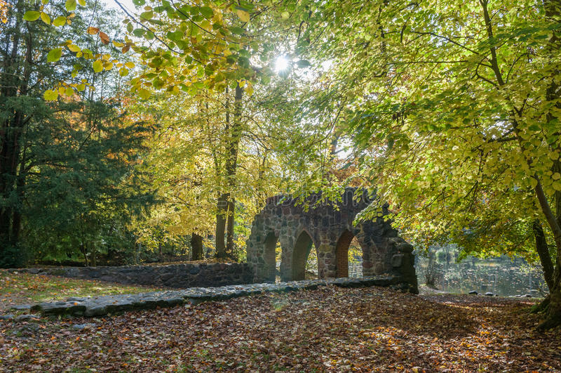 Höst i skog royaltyfria foton