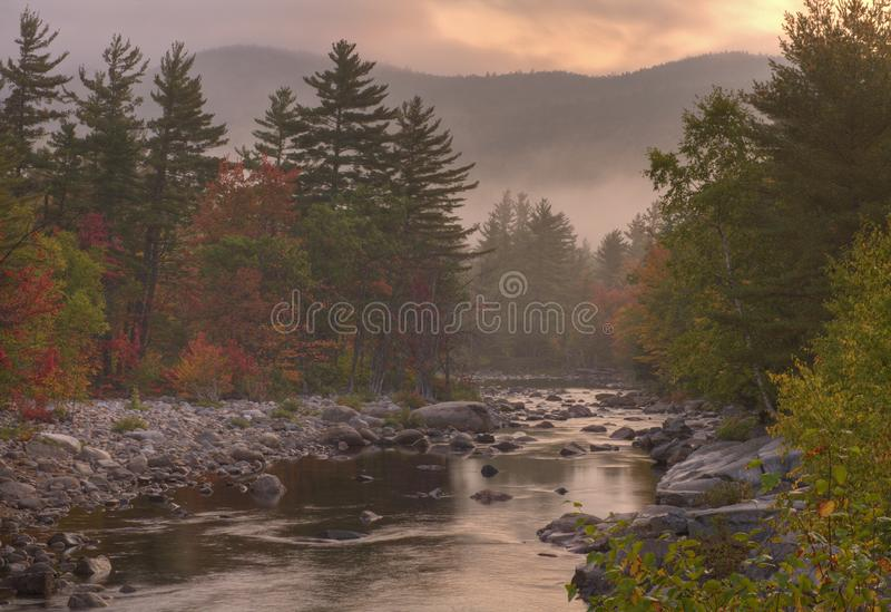 Höst i skogen royaltyfri foto