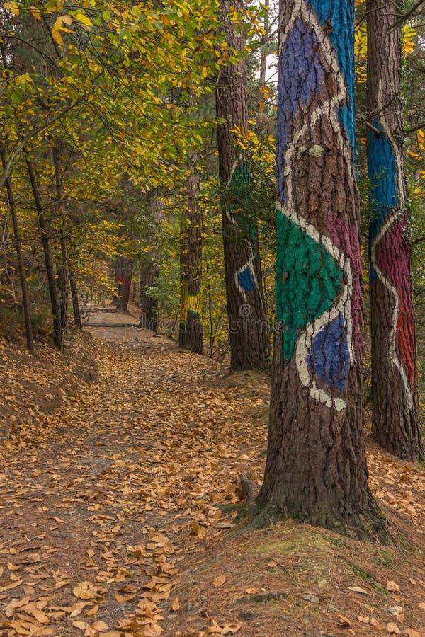 Höst i skogen av Oma arkivfoton