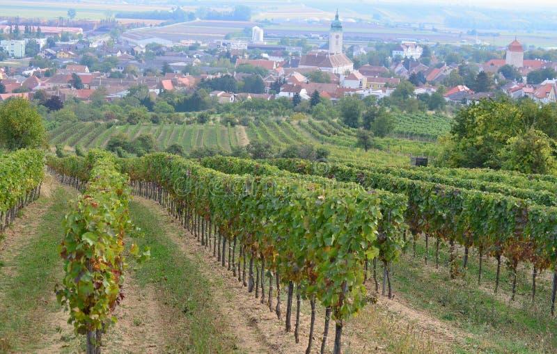Höst i vingården, lägre Österrike royaltyfri fotografi