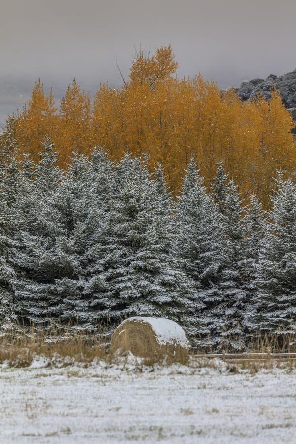 Höst in i vinter - ny snö faller på höstträd förutom royaltyfria foton