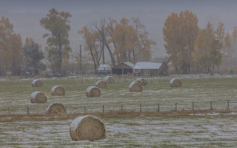 Höst in i vinter - ny snö faller på höstträd förutom royaltyfria bilder