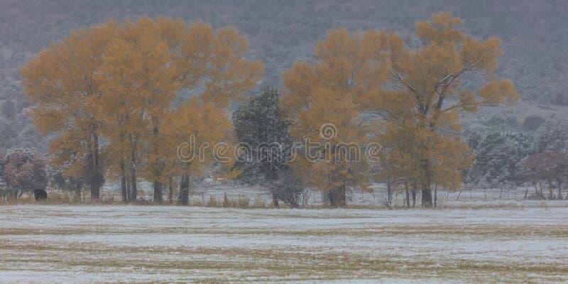 Höst in i vinter - ny snö faller på höstträd förutom arkivfoto
