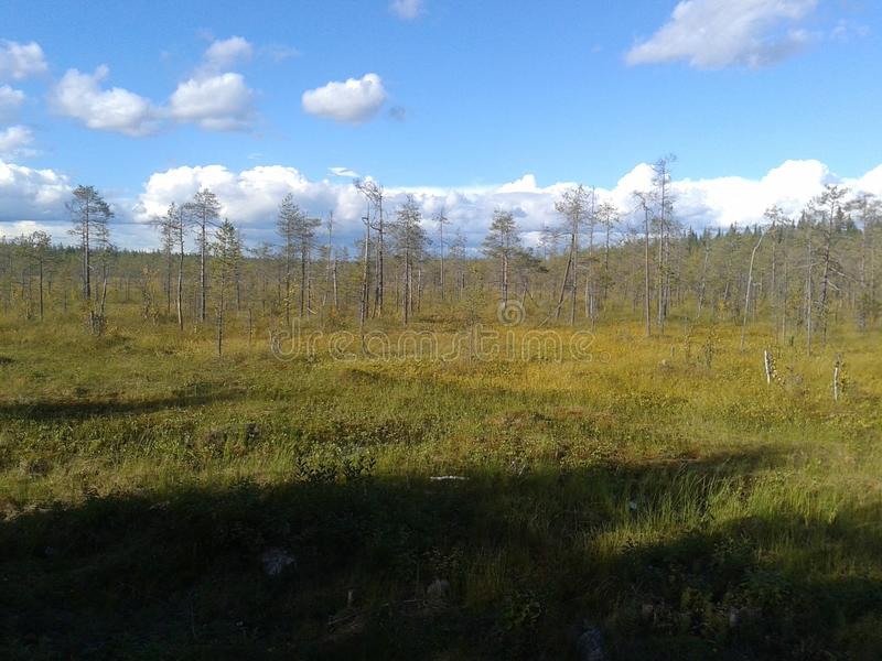 Höst Karelia, jakt, skog, landskap, Lake Ladoga arkivfoto
