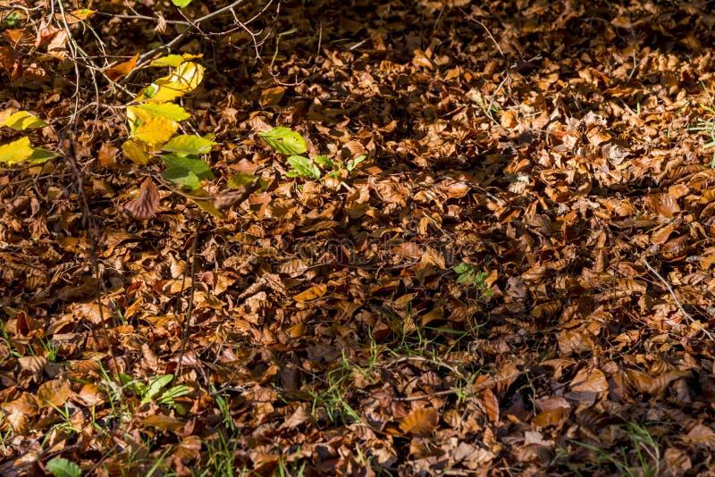 Höst - Leavs bakgrund i skog royaltyfri foto