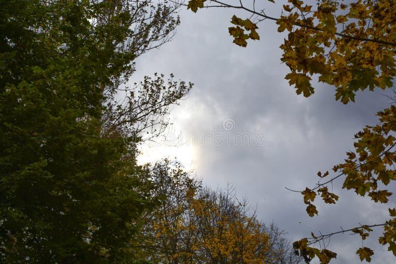 Höst natur, molnig himmel för höstskog guld- leaves för höst royaltyfria foton