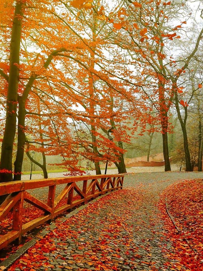 Höst Nedgångplats höstlig härlig park royaltyfri bild