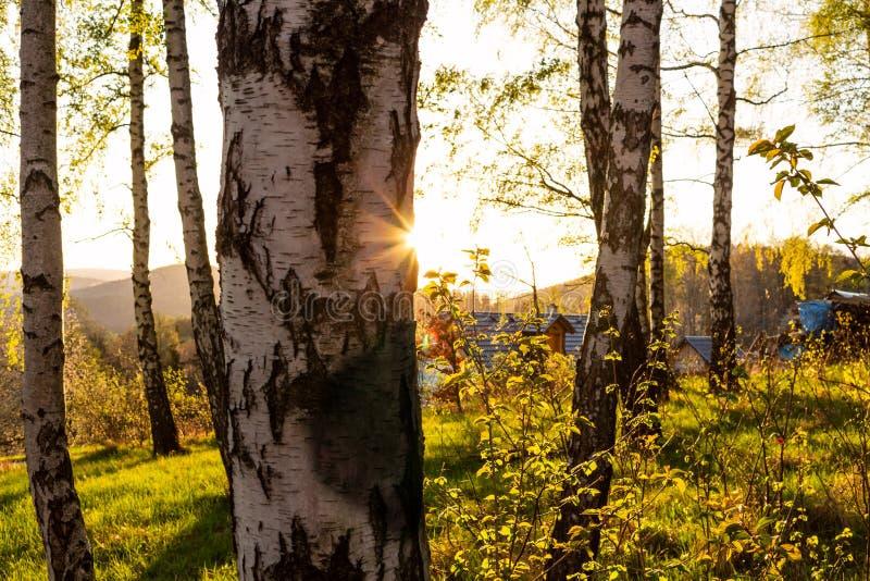 Höst Nedgångplats höstlig härlig park Skönhetnaturplats Höstlandskap, träd och sidor, dimmig skog i solljus arkivbilder