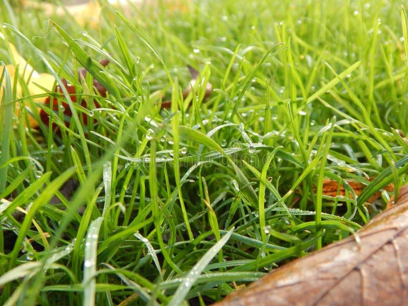 Höst och gräs arkivfoton