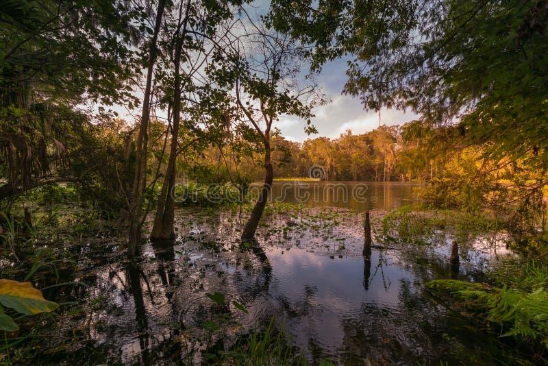 Höst på den Silver Springs delstatsparken i Ocala, FL arkivbild