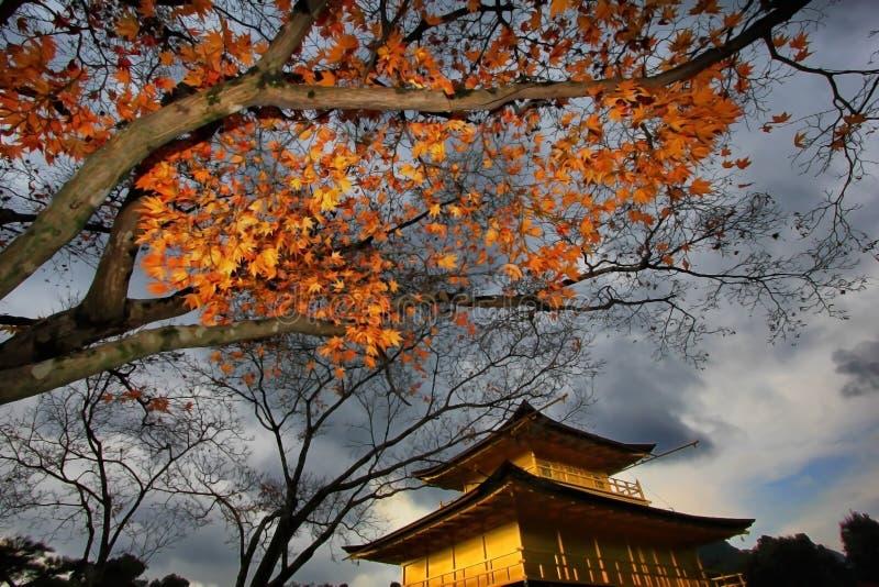 Höst på Kinkaku-ji, den guld- paviljongen i Kyoto, Japan royaltyfri bild
