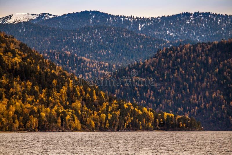 _ Höst på sjön Teletskoye Gräsplan-guling palett av färger på kusterna arkivbild