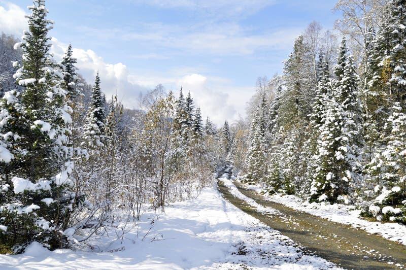 Höst 30 09 2017 Var ett klart himlen, men i skogen har passerat den första snön royaltyfria foton