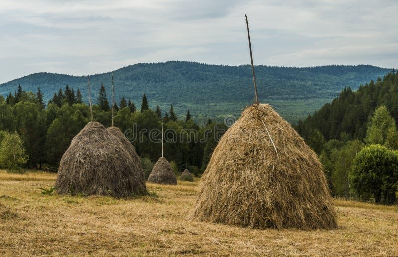 Höstackar i bergen royaltyfri foto