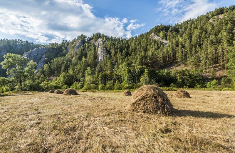 Höstackar i bergen royaltyfria foton