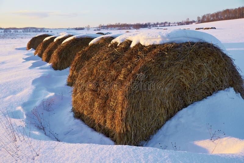 Höstackar i snöig fält på vinterdag royaltyfri bild