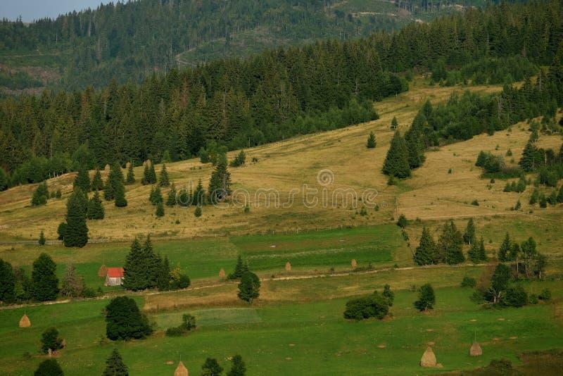 Höstackar på härlig sommarplatå i Carpathian berg royaltyfri foto