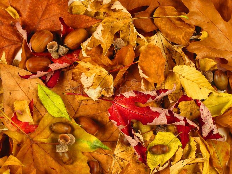 Download Höstbakgrund arkivfoto. Bild av textur, close, varmt, leafs - 288722