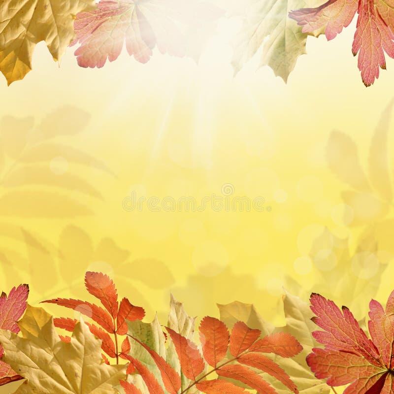 Höstbakgrund royaltyfri illustrationer