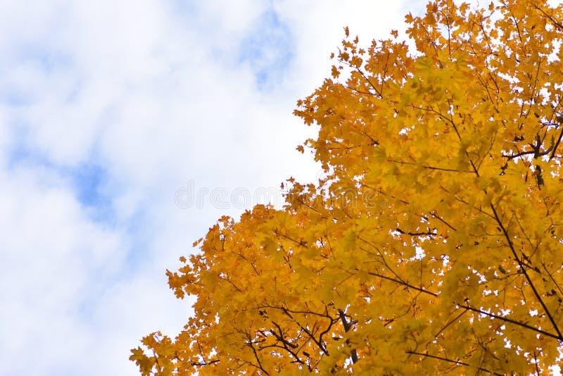 Höstbakgrund delade vid en molnig blå himmel och gulingträdsidor royaltyfria foton