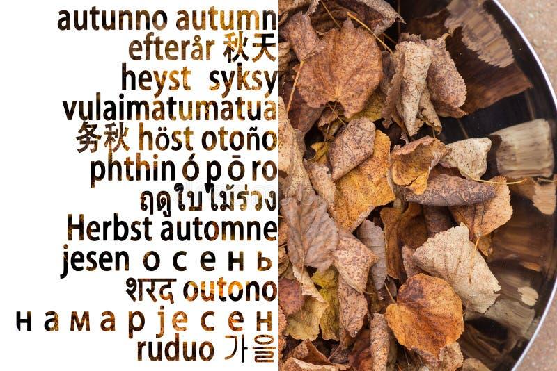 Höstbakgrund i många språk royaltyfri foto
