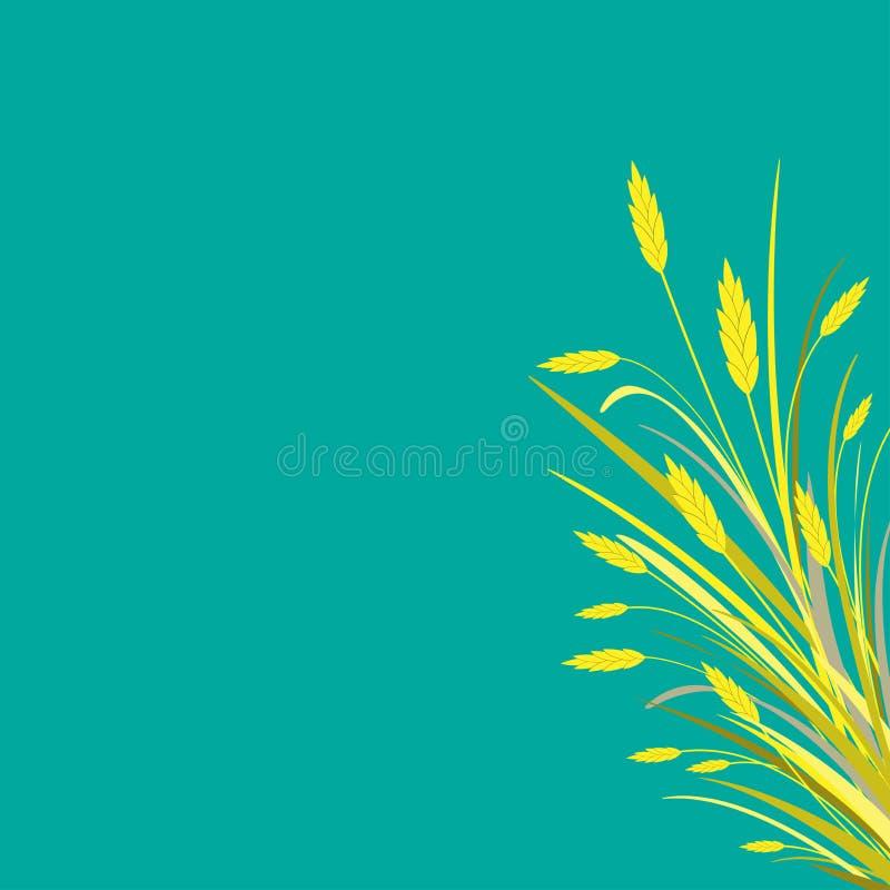 Höstbakgrund med buketten av guld- öron av vete, korn eller råg på det vänstert Isolerat på turkosbakgrund royaltyfri illustrationer