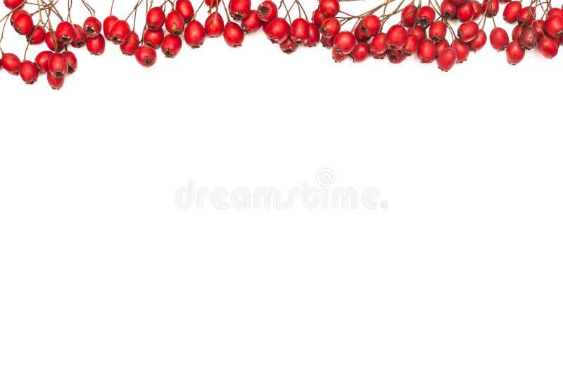 Höstbakgrund med frukter på vit bakgrund fotografering för bildbyråer