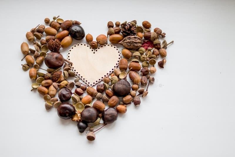 Höstbakgrund med hjärta, kastanjer, muttrar, jordnötter, ekollon, på vit bakgrund med kopieringsutrymme Förälskelse i nedgångbegr arkivfoton