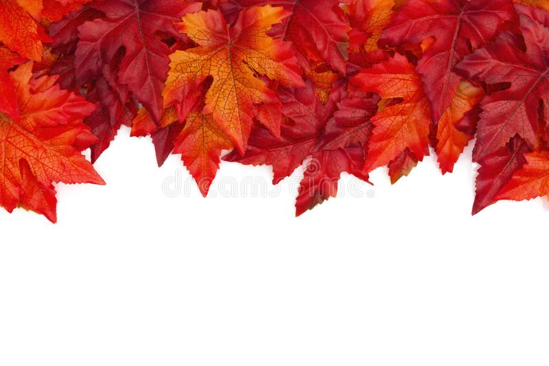 Höstbakgrund med röda och orange nedgångsidor som över isoleras arkivfoto