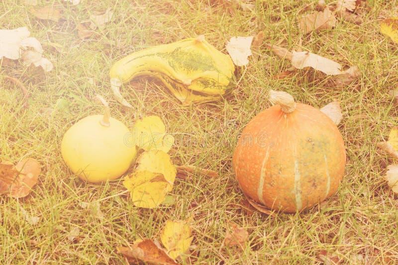 Höstbakgrund med säsongsbetonade höstpumpor, äpplen och päron på bakgrund av höstsidor och gräs arkivbild