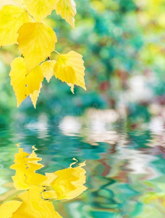 Höstbakgrund med sidor för den gula björken reflekterade i ett vatten arkivbilder