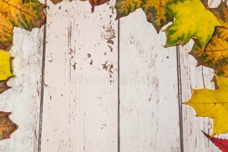 höstbakgrundscloseupen colors orange red för murgrönaleaf arkivbilder